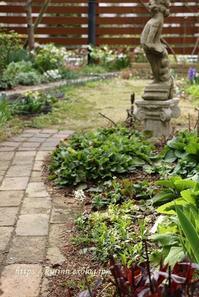 はじめてのご対面~^^♪早春のお花たち - miyorinの秘密のお庭