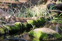 井の頭自然文化園2019年3月20日 - お散歩ふぉと2