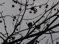 春なのに秋のたたずまい(岡) - 柚の森の仲間たち