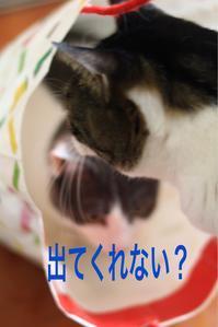 にゃんこ劇場「今時の若い猫(もん)」 - ゆきなそう  猫とガーデニングの日記