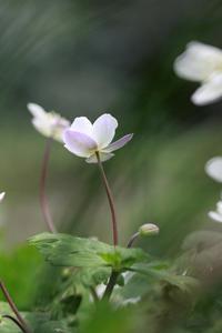 二輪草@都立赤塚公園 - meの写真はザンス