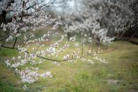 春の香りがする - 気の向くままに…