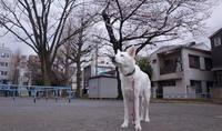 勇み足 - 小太郎の白っぽい世界
