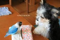 B.B & Chipo*そういう季節なの・・ - FUNKY'S BLUE SKY
