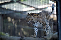 木登りダッシュ - 動物園へ行こう