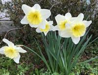 春は間違いなくやってきますね。 - いつとこ気まぐれブログ