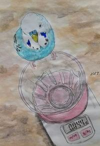 無題の水彩画 - Blue & Yellow Budgie