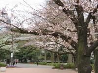 桜 - 夢の超特急・カメ号