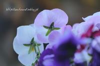 花冷え - 一瞬をみつめて