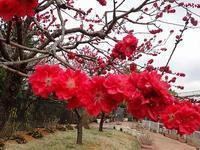 「カトレア原種展」と関西テレビ「よーいドン!」 - 手柄山温室植物園ブログ 『山の上から花だより』