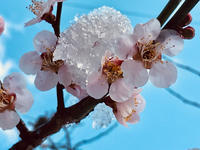 梅花のシャーベット - 流れる雲のように