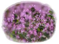 吉備路の野の花 - ひとりあそび