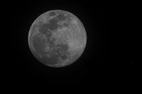 春霞の夜空に「月とヒコーキ」 - ギャラリー☆花鳥風翼II