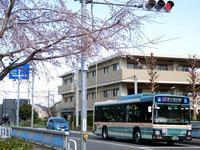 2019年桜開花 - 黄色い電車に乗せて…