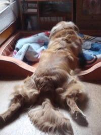 朝の散歩後のルーティン&寝る時は腕枕☆ - 風太マンが行く
