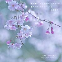 桜人 - 日々の欠片を紡ぐ日々
