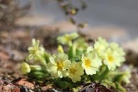 咲いた咲いた♪ - my small garden~sugar plum~