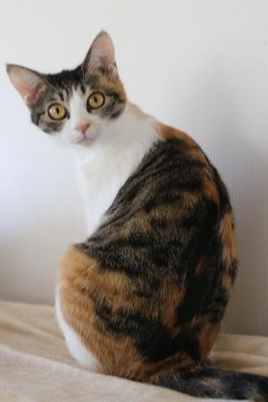 今日は簡単に - 保護猫さんのご縁探し