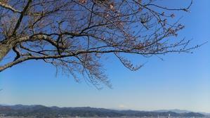 3月の牧之原公園マルシェ季節のほっこり市 -