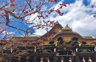 早春の京。なごり梅にさきそめ桜 - ライブ インテリジェンス アカデミー(LIA)