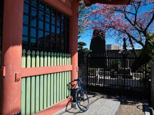 2019 自転車日和・「黄色」に会いに行く(江戸川CR) -
