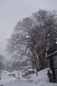 冬は終わらない - 松之山の四季2