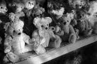 Teddy Bears Infatuated With The Spring Sunset - SILENT SOLILOQUY