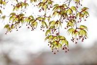 芽吹きと開花 - ecocoro日和