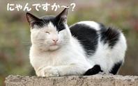 野良猫★カイワレ★ハチワレ★しばらくの間・・・ - 月夜飛行船