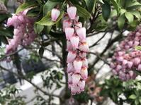 庭に春の便り - 笑わせるなよ泣けるじゃないか2