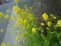 コンサートのあと🌱春の花々 - ピアニスト山本実樹子のmiracle日記