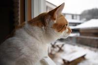 昨日の雪 - ちわりくんのありふれた毎日II