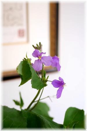 今日の花と一人ごはん - Less is more