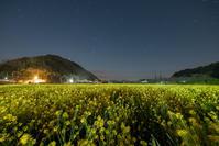 菜の花畑で・・・ - **photo cafe**