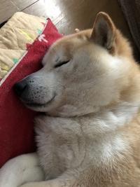 わしも犬になりたい・・・ - カメラノチカラ