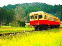 小湊鉄道春の中を走る - 風の香に誘われて 風景のふぉと缶