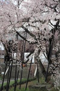 東郷寺 - Taro's Photo