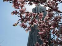 ヨコハマ散歩・春なのです #1 - 神奈川徒歩々旅