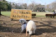 初めての公園 - ポロと歩く