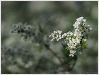 赤塚植物園の春-1016) - 趣味の写真 ~OLYMPUS E-M1MarkⅡ、PenF~