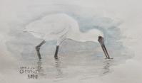#野鳥スケッチ #ネイチャー・ジャーナル『黒面箆鷺』 Platalea minor - スケッチ感察ノート (Nature journal)