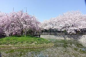 高槻市 筒井池公園の桜 - レトロな建物を訪ねて