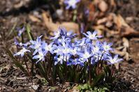 薬草園で咲いていた春の花☆2種 - さんじゃらっと☆blog2