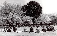 <村社会>1990年頃新宿区 - 藤居正明の東京漫歩景