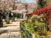 3月25日(月)/桜の開花チェック - Long Stayer