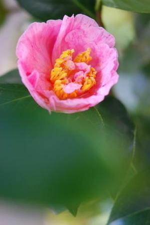 ピンク~~ - 花便り