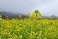Monday rain(3月4日) - ratoの山歩き