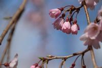 咲いてる花が増えてきて~~♬ - とり頭ばーばんの七転び八起き