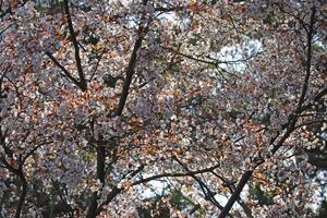 春日公園 -
