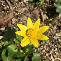 黄色の花 - 帽子工房 布布
